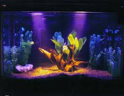 freshwater fish aquariums