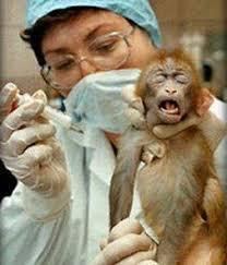 animal testing is inhumane