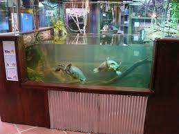 huge turtle tank