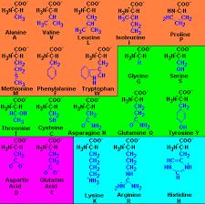 amino acid group