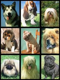 dog species pictures