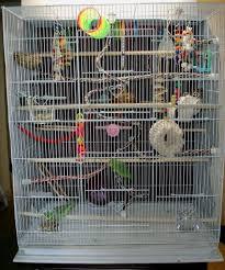 parrotlet cages