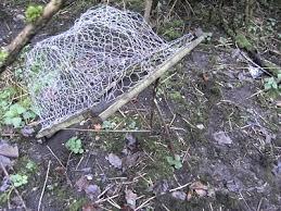 pheasant traps