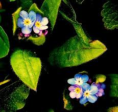 photography of flowers