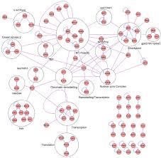 genetic interactions
