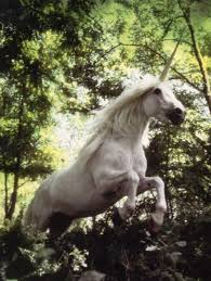 robert vavra unicorns