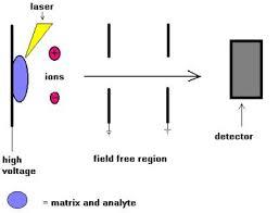 maldi tof mass spectrometry
