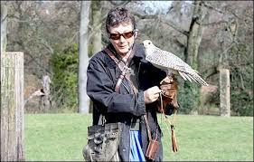 falcon birds of prey