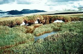 pics of tundra