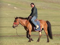 horse and rider pictures