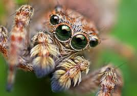 spiders with wings