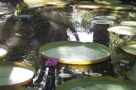 lile maurice