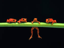 frog wall paper
