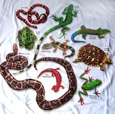 images of reptiles