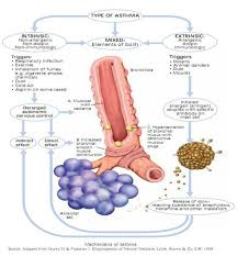 gambar asma