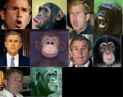 ape photos