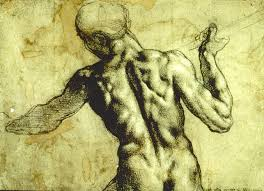 anatomy for art