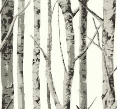 grey birch tree