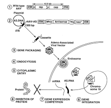 aav gene therapy