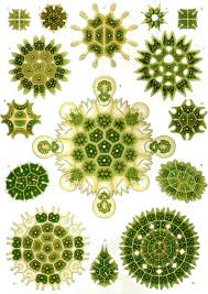 ernst haeckel art forms in nature
