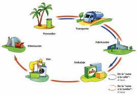 el ciclo de vida