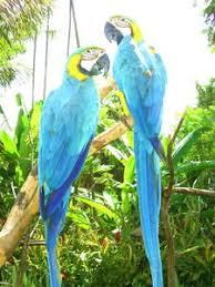safari birds