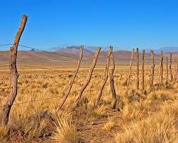pampas in argentina