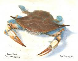blue crab paintings