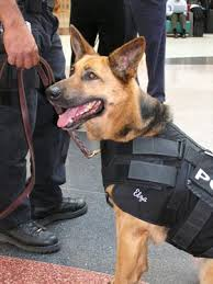 police dog vests