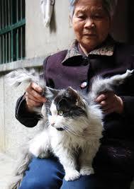 cat growths