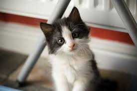 cute cats pic