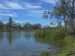 freshwater vegetation