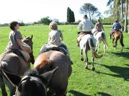 horses back riding