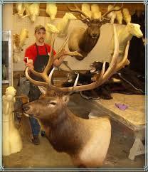 elk heads
