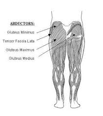 hip abductor muscles