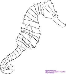 drawing seahorses