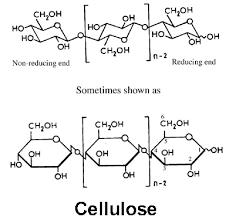 cellulose monomers