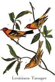 bird audubon