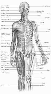 human body graphics