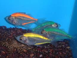 fresh water fishes