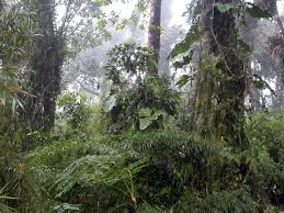 rainforest in ecuador