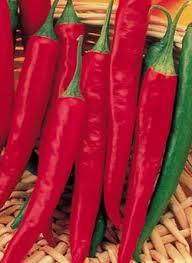 cayenne pepper herb