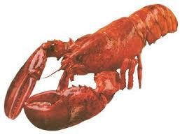 lobster fish