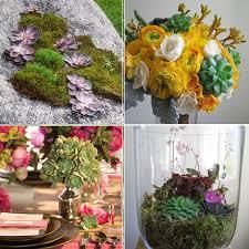 popular succulents