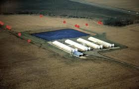 swine farms