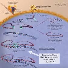 hiv integrase