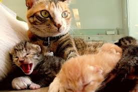 baby cats being born