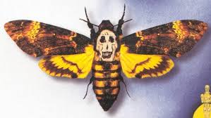 moths pictures