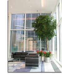 plant for office