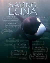 luna the whale
